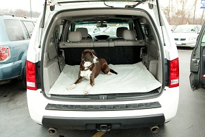 Bergan Cargo Comfort Dog Bed Liner for back of SUV, Ultra-soft Cargo Liner for Pets.