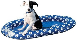 Best Inflatable Raft For Dogs