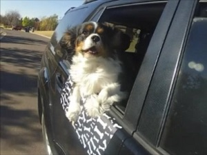 Favored Pet Back Seat And Bucket Seat Dog Cover For Car